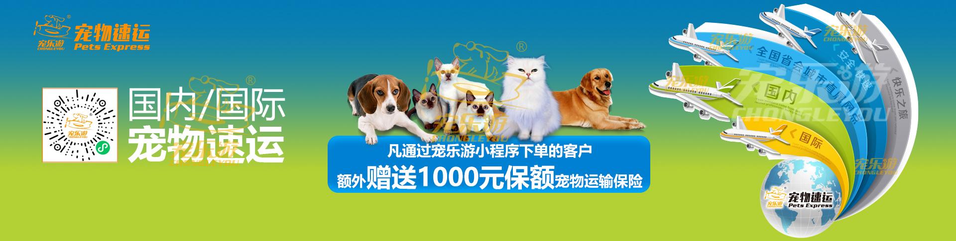 國內國際寵物托運服務